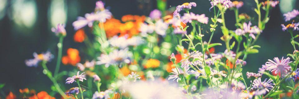 Der Garten ist ein anderer Himmel mit Sternen aus Blumen